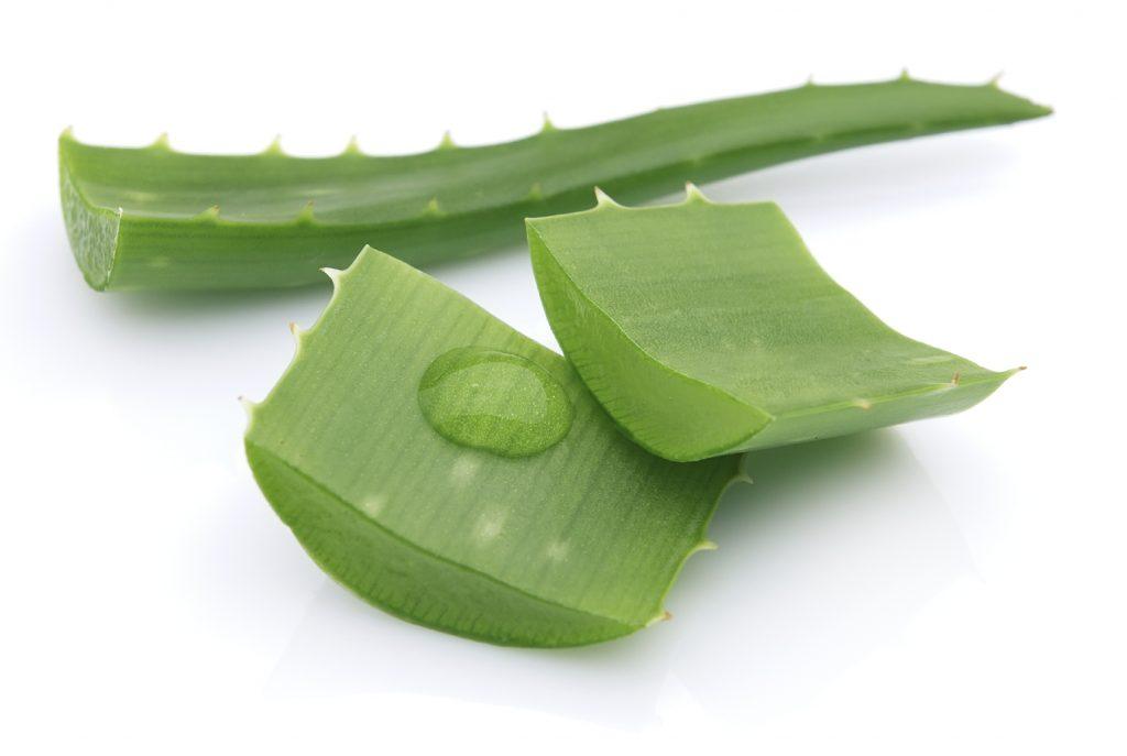 101 Usos del Aloe Vera sabes todo?