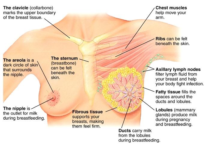 Imágenes de ultrasonido de cáncer de mama
