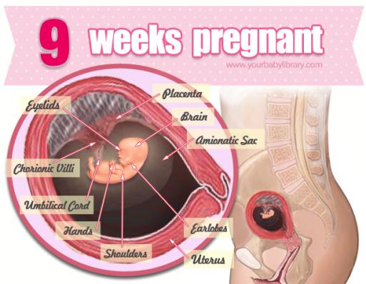 9 semanas de embarazo aborto involuntario